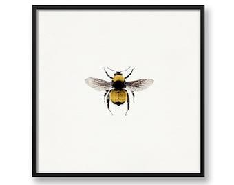 Bee Print, Bumblebee Print, Bee Wall Art, Bumblebee, Bee, Square Print, 8x8 Print, 8x10 Print, Birthday Gift, Bee Art, Office Wall Art