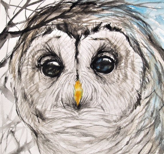 Owl Drawing Original Artwork Barred Owl Bird Art Animal Illustration Wildlife 11x11.6in