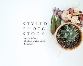 Potted Cactus & Pink Floral Styled Stock Photography, Product Mockup, Styled Background, Product Photography, Digital Background, Desktop