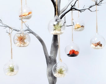 Hand Crafted in the UK - Fully Assembled Terrariums Available with Stunning Airplants or Succulents.