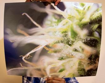 Tuco Salamanca (5 options) - Cannabis Poster - Dab Art - Pot Leaf - 420 Print - Marijuana Pic - Weed Pipe - Bong - Custom Strain - trichome