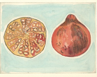 Pomegranate fruit original etching with watercolour