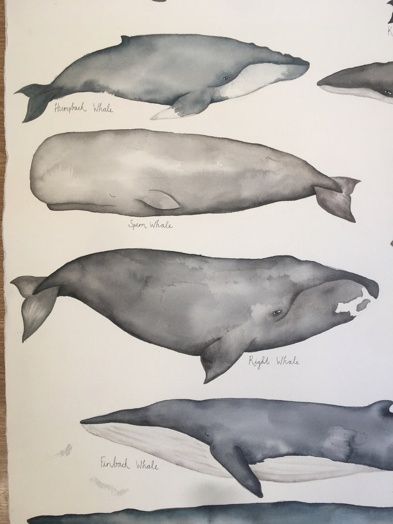 illustration whale original watercolour painting Whales to scale underwater art wall art