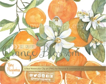 Orange Branches Flowers Blossom clip art images watercolor hand painted PNG transparent background fruits for blog cards invitations