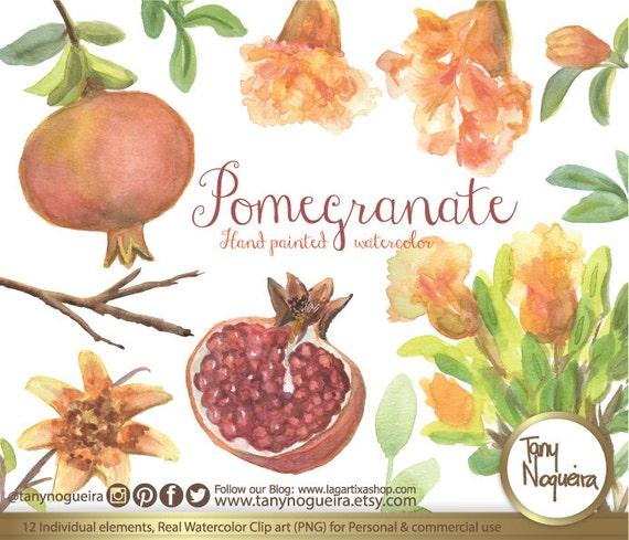 Granadas Acuarela Dibujo Flores Frutas Botánica Blog Shabby Chic Vintage árbol De Granada