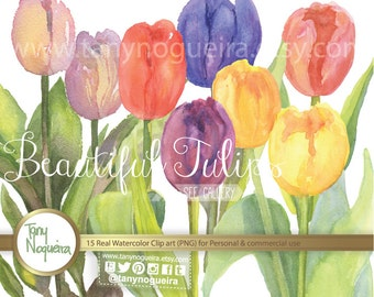 Tulips, Bulbs, clip art images watercolor hand painted PNG transparent background for cards invitations and one JPG image ready to print