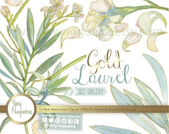 Bay Laurel Flowers and Leaves Gold Leaf clip art images watercolor hand painted PNG transparent background JPG for blog cards invitations