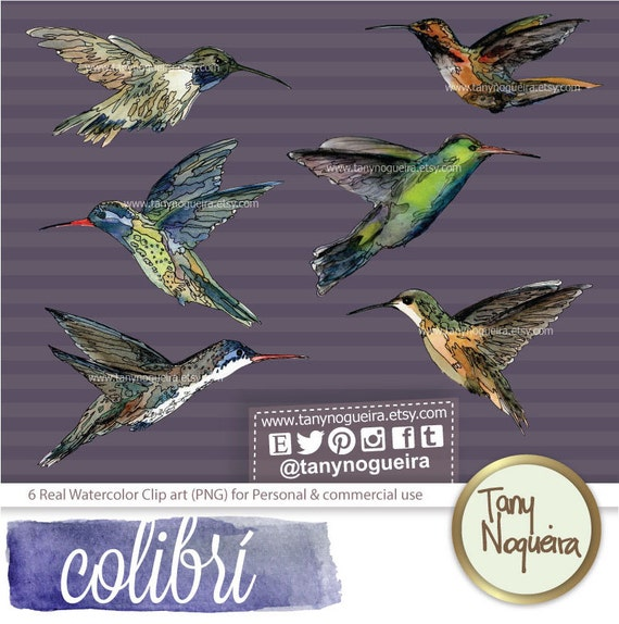 Clipart Colibri Fond Png Transparent Pour Invitations Cartes Bebe Blog Aquarelle Unique Douche Ou Adieu