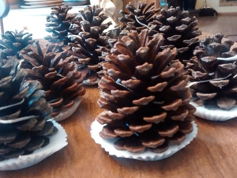 200 Great For Rustic Country Weddings Pinecone Firestarter Guest Favors