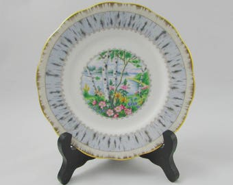Silver Birch Bread and Butter Plate, Dessert Plate, 6.25 Inches Vintage Royal Albert, Single Plate