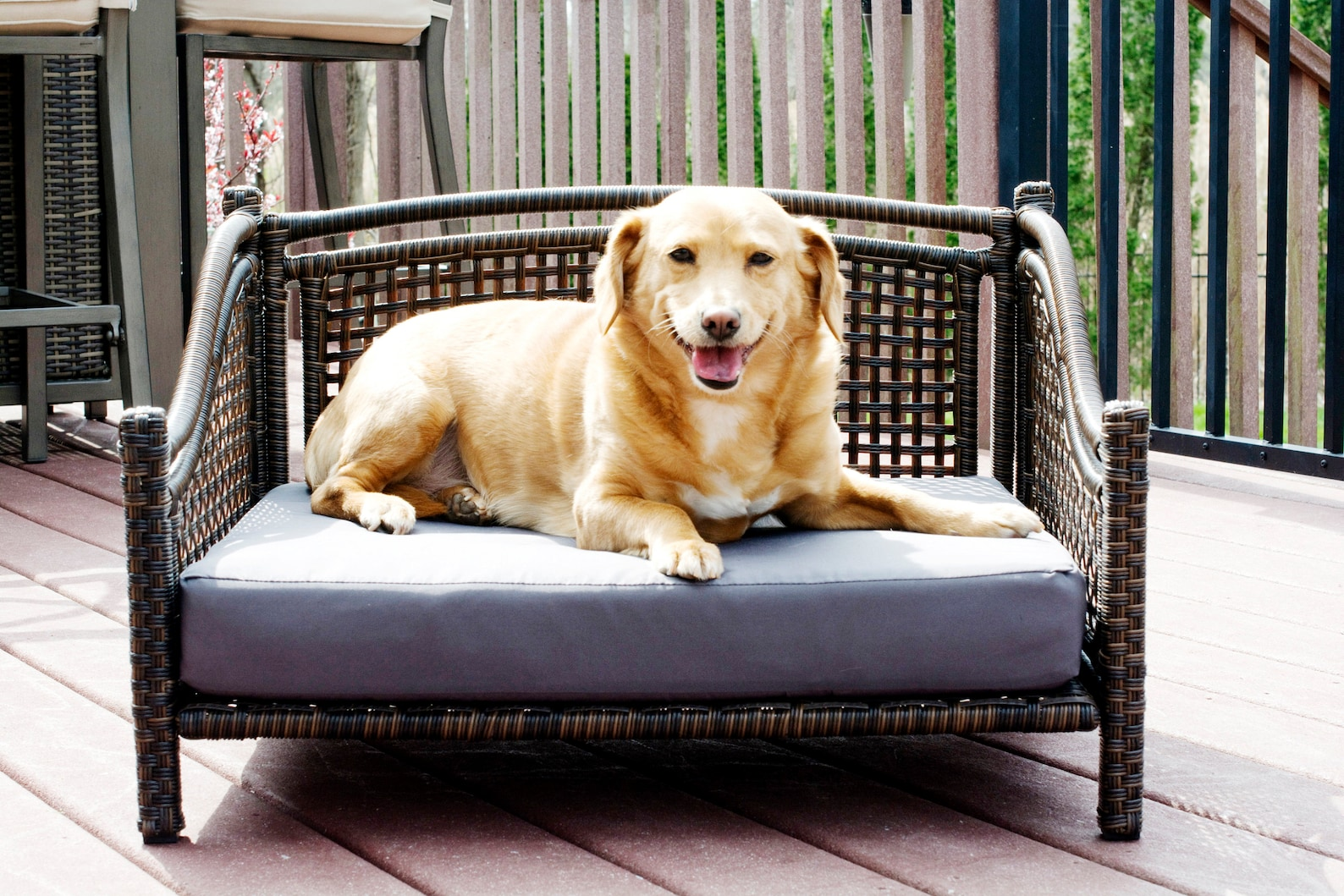 Dog relaxing on a rattan dog bed