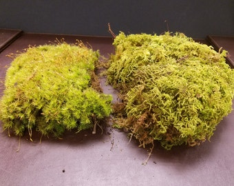 Mixed Live Moss [Multiple Sizes] (Terrarium, Vivarium, Fairy Garden, Home Decor, Modeling)