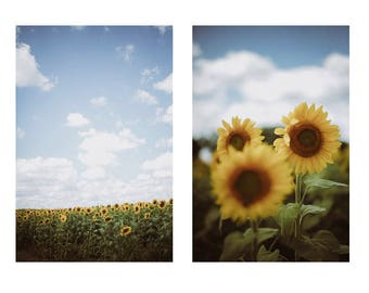 sunflower print set // fields of yellow flowers // 8x10 Matte Living Room Teri B photography // country fine art photo, rustic blooms summer