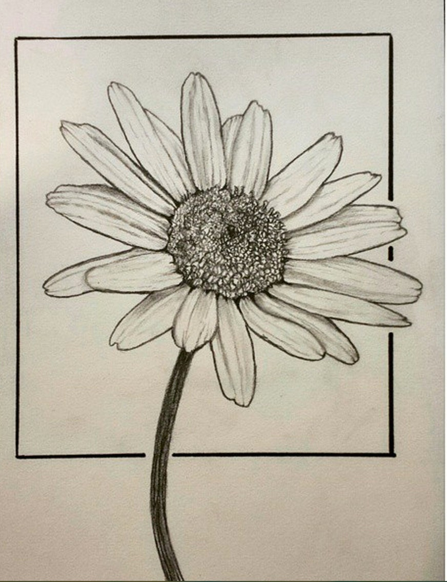 Original daisy flower drawing 55x9 inches graphite and ink etsy zoom izmirmasajfo