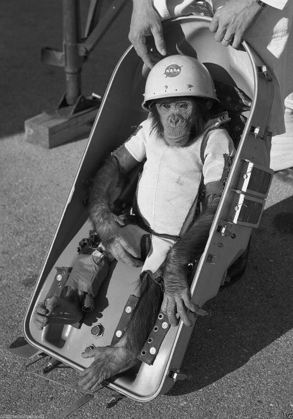 HAM The ASTROCHIMP the first Monkey Launched into Space in 1961 a great item for the Astronaut fan Black and White PHOTOGRAPH ...