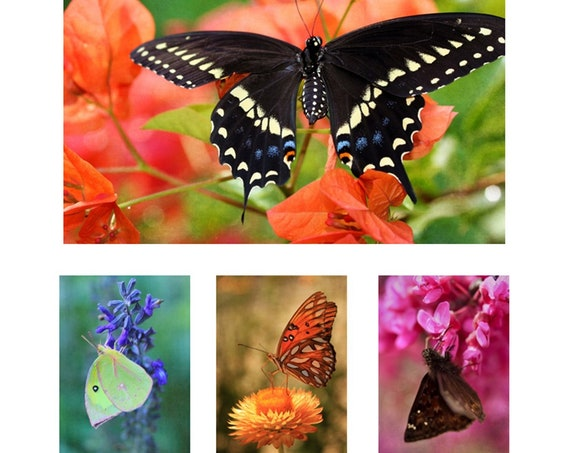"Set of 4 ""Wings"" 5x7 Butterfly Greeting Cards, Blank Inside, Professionally Printed on Heavy Classic Felt Card Stock, Folded with Envelopes"