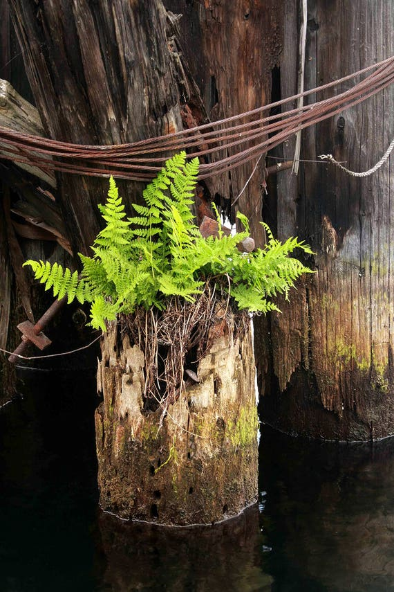 "Metal Art Print ""Juxtaposition"", Fern Photography Printed on a Brushed Aluminum Box, 16x24x1, SPECIAL ORDER ONLY"