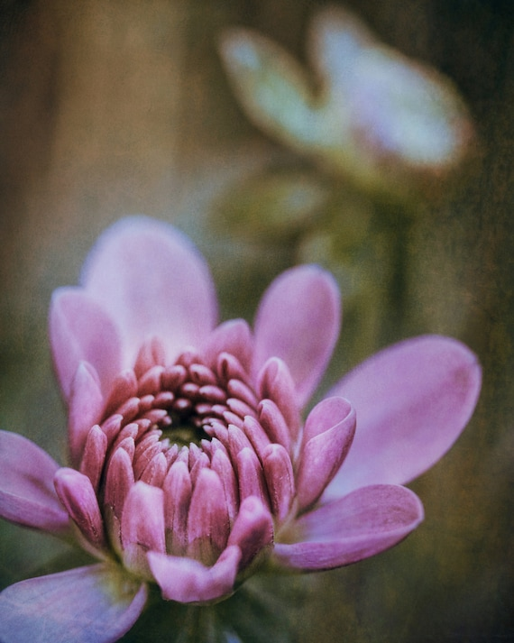 "Limited Edition Metal Art Print ""Romance #3"", Dahlia Flower Photography Printed on Aluminum with Float Mount, 16x20, SPECIAL ORDER ONLY"