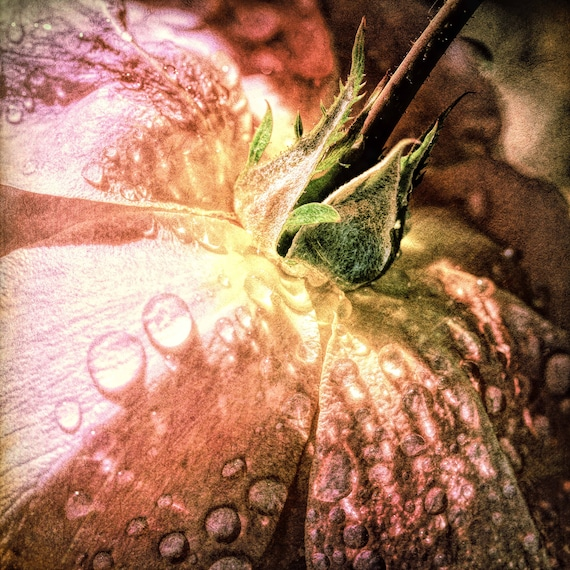 "Metal Art Print ""For You"", Flower Photography Printed on a Brushed Aluminum Box, 20x20x1, SPECIAL ORDER ONLY"