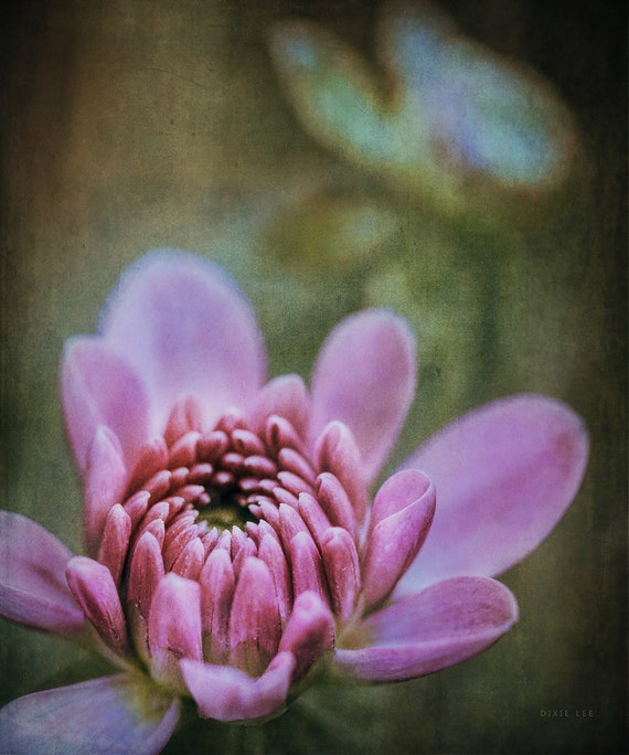 "Limited Edition Metal Art Print ""Divine No. 3"", Dahlia Photography Printed on Aluminum with Float Mount, Various Sizes, SPECIAL ORDER ONLY"