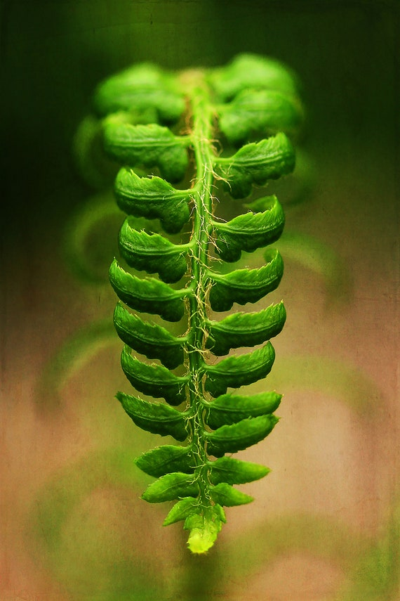 "Limited Edition Metal Art Print ""Align"", Fern Photography Printed on a Brushed Aluminum Box, 16x24x1, SPECIAL ORDER ONLY"