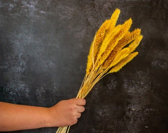 Dried Flower Stems. 15 stems of Yellow Setaria. Dyed foxtail or bristle grass.