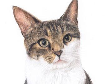 Custom Cat Pet Portrait Colored Pencil Drawing (Small) — 2018 Commission Slot