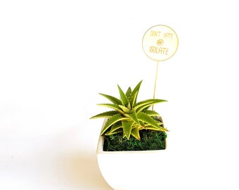 Don't Hate, Isolate - Succulent gift