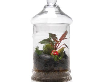 Candy Jar Terrarium with Toadstool
