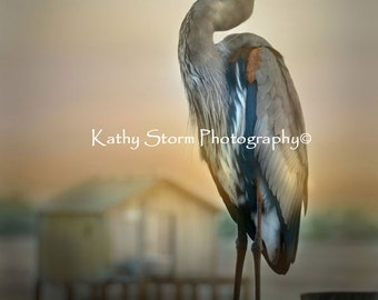 Great Blue Heron, Florida birds, wildlife and nature photography.    Wall art. Home Decor.  FREE SHIPPING!