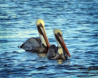 Pelican, Brown Pelican, Florida Birds, water birds, wildlife photography, Wall Art, Home Decor, FREE SHIPPING!