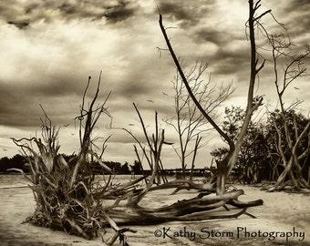Florida landmark, Fine Art Photography, sepia, seascape, beach life,  wall art,  home decor, FREE SHIPPING
