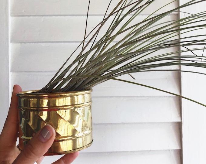 Tiny Vintage Brass Plant Holder / MCM Boho Planter / Farmhouse Nursery and Home Decor