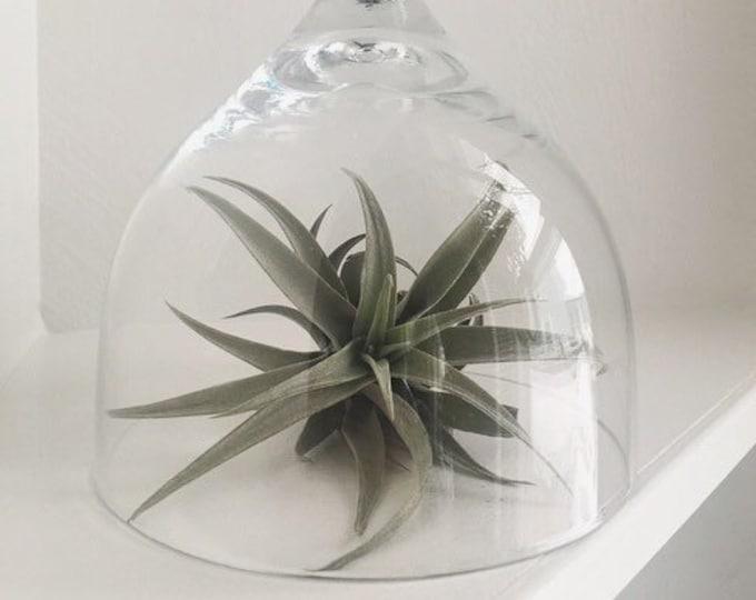 Vintage 6.5in Glass Display Cloche / Simple Farmhouse Glass Dome Decor Piece