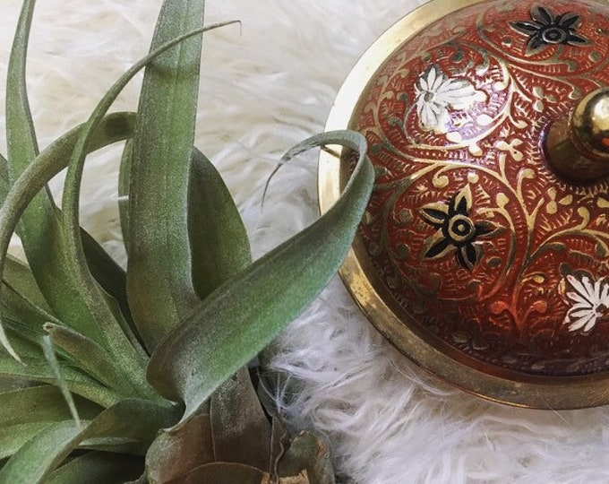 Ornate Etched and Enameled Brass Dish / Vintage Brass Bowl with Lid / Brass Jewelry Holder
