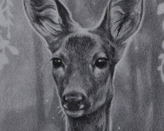 Original graphite drawing - Chevrette - 18.6 x 27.2 cm