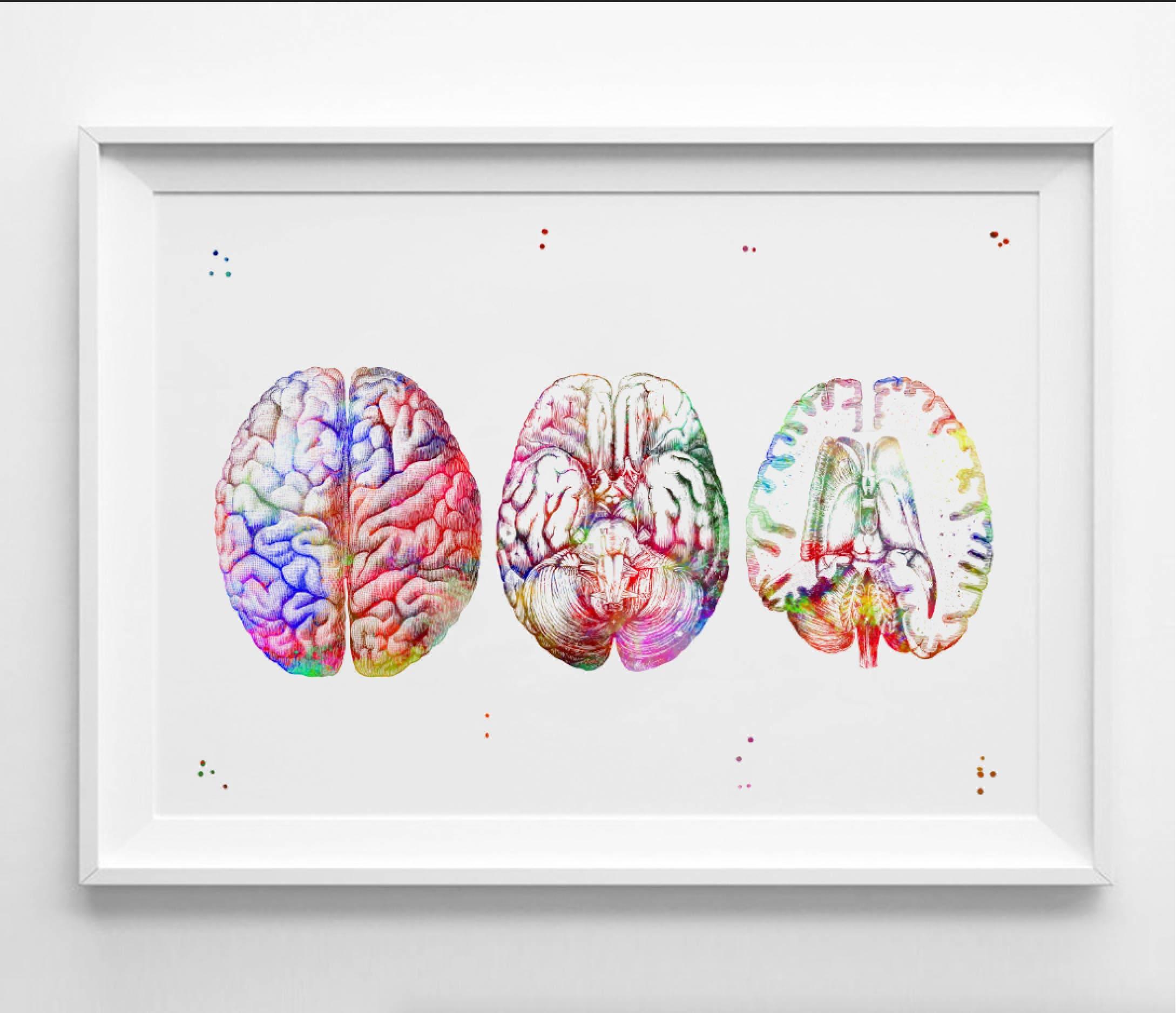 Menschliche Gehirn Druck Aquarell Anatomie des Gehirns Section | Etsy