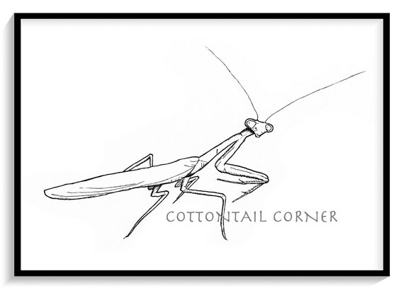 praying mantis drawing simple