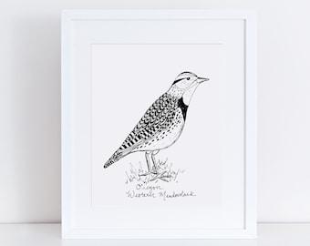 Oregon Meadowlark State Bird Art Print /  Oregon Decor / Meadowlark Drawing / Oregon Gift / Black and White Bird Drawing / Pacific Northwest