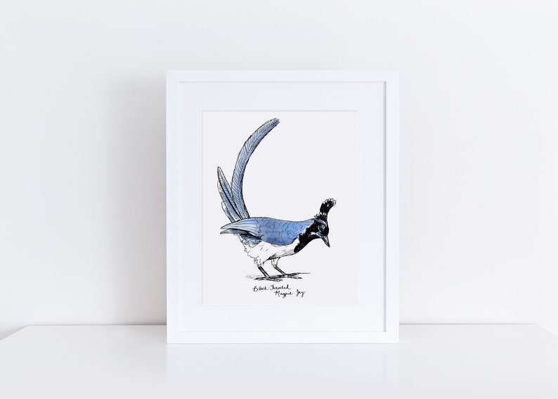 Black-Throated Magpie-Jay Art Print / Blue Bird Wall Art / image 0