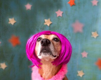 my stars - Dog photography Color print