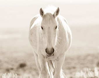 """Wild Horse Photography, Horse Photographs, Sepia Tone, Mustangs. """"White Lady"""""""