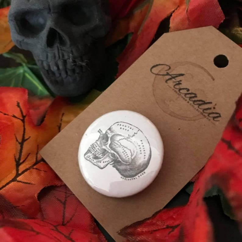 Vintage Skull Badge  Part of the Anatomy Collection  Gift for Her / Him