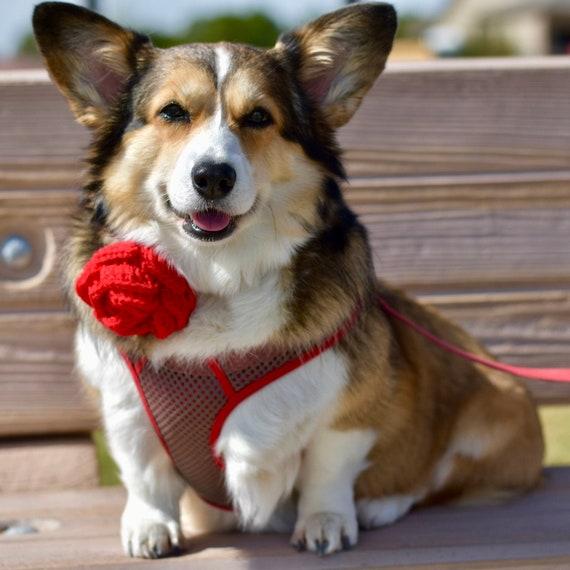 Dog Collar Flower Accessory