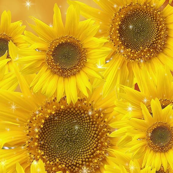 Sprüche 1722 Ein Fröhlich Herz Medizin Sonnenblumen Get Well Bibel Vers Zum Ausdrucken Digital Download Kunstdruckposter 8 X 10