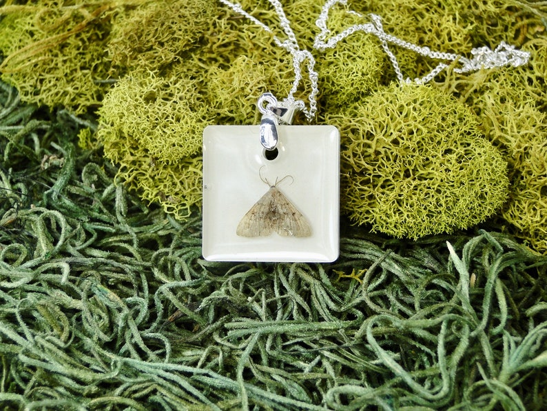 Real Moth Necklace real insect jewelry taxidermy jewelry image 0