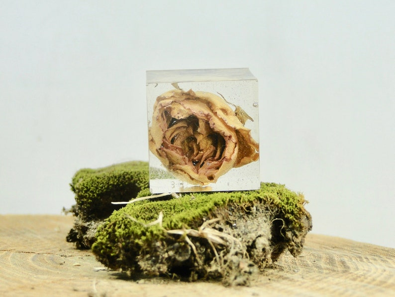 Dried Rose Cube  Dried Flower Cube  Real Flower Display  image 0
