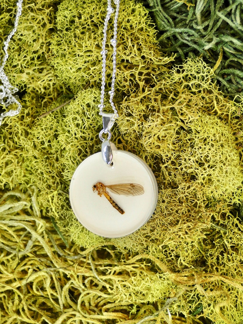 Wasp Necklace real insect jewelry taxidermy jewelry specimen image 0