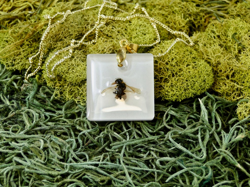Real Bee Necklace real insect jewelry taxidermy jewelry image 0