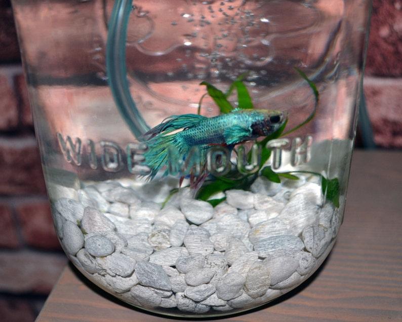 Mason Jar Aquaponics